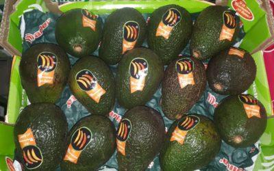 Aguacate en Frutas Bucar