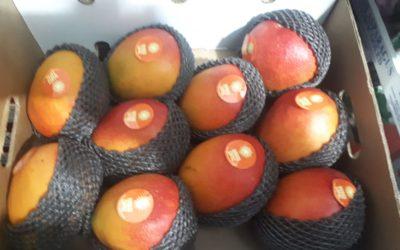 Mangos de Avión de Perú en Frutas Bucar