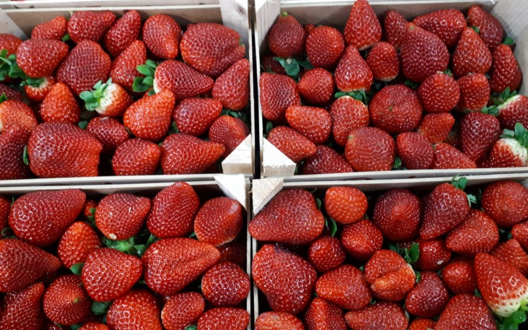 Fresas en Frutas Bucar