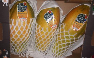 Papayón en Frutas Bucar